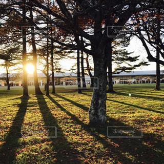 公園の大きな木の写真・画像素材[747976]