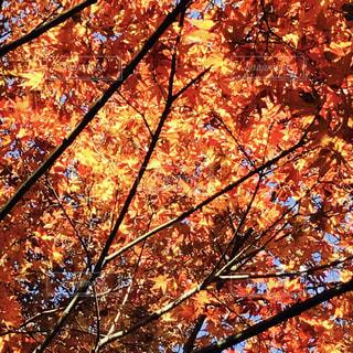 大きな木の写真・画像素材[747978]