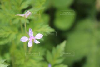 近くの花のアップの写真・画像素材[748546]
