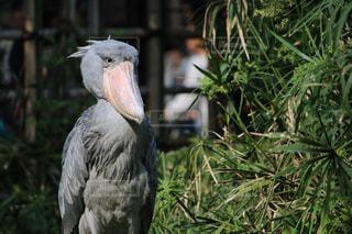 不動の鳥の写真・画像素材[748619]
