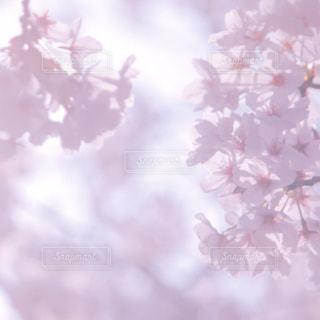 近くの花のアップの写真・画像素材[1090761]