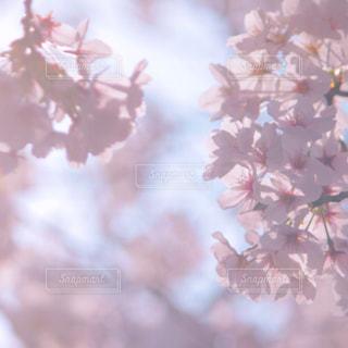 近くの花のアップの写真・画像素材[1090763]