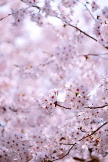近くの花のアップの写真・画像素材[1090767]