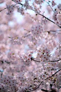 近くの花のアップの写真・画像素材[1090769]