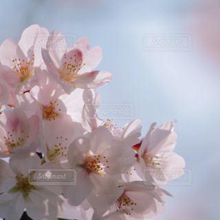 近くの花のアップの写真・画像素材[1090789]