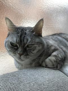 横になって、カメラを見ている猫の写真・画像素材[756929]