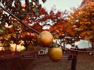 近くの木のアップの写真・画像素材[848913]