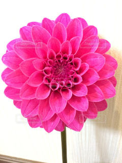 花の写真・画像素材[840068]