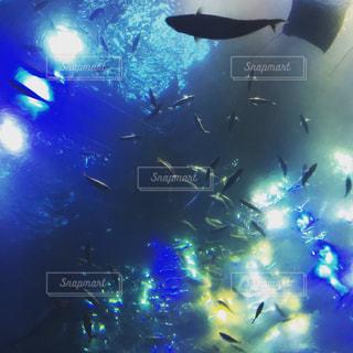 青い空を飛ぶ大型旅客機の写真・画像素材[748741]