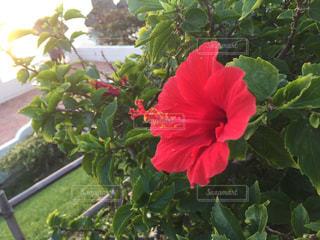 緑の葉と赤い花 - No.748847
