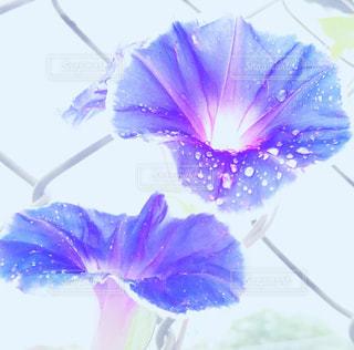 近くの花のアップの写真・画像素材[749132]