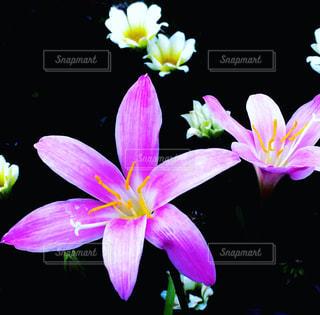 庭の花の写真・画像素材[756648]