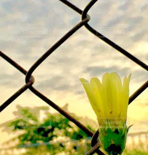 朝空と花の写真・画像素材[759977]
