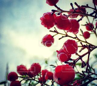赤い花の上に座っての花で一杯の花瓶の写真・画像素材[896314]