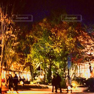 ツリー横の通りを歩く人々 のグループの写真・画像素材[901785]