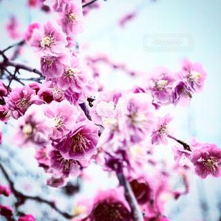 近くに紫の花のアップ - No.1070800