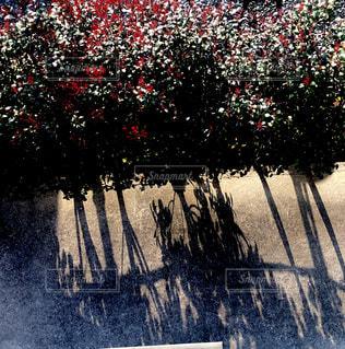 茂みの写真・画像素材[1092991]