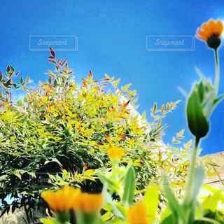 近くの花のアップの写真・画像素材[1092992]