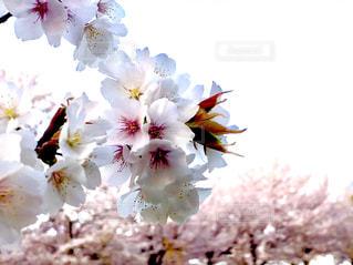 近くの花のアップ - No.1099254