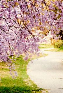 道路の真ん中にツリーの写真・画像素材[1099325]