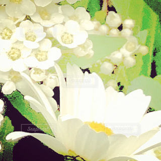 近くの花のアップ - No.1123968