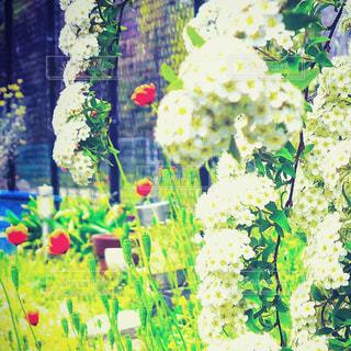 色とりどりの花のグループの写真・画像素材[1133533]