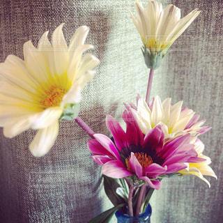 黄色い花の上に座って花の花瓶の写真・画像素材[1186025]