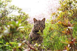 目があった猫の写真・画像素材[805266]