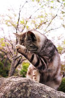 岩の上に座っている猫 - No.805269