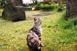 猫のお花見 - No.805274