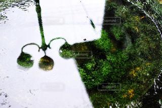 水に映った景色の写真・画像素材[805650]