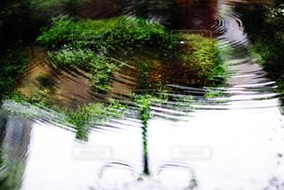 水に映った景色の写真・画像素材[805652]