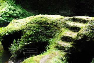 森の中の階段の写真・画像素材[805656]