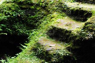 森の中の階段の写真・画像素材[805657]