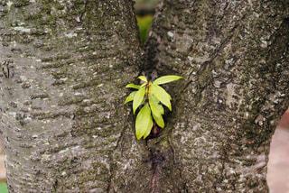 樹木の写真・画像素材[806024]