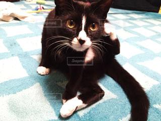 ストレッチ中の猫 - No.806734