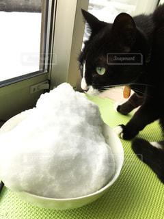 雪と猫の写真・画像素材[806790]