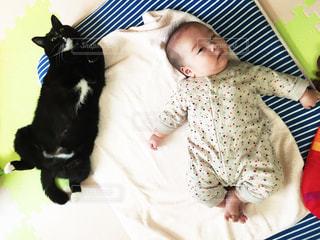 見つめる猫と子供の写真・画像素材[809928]