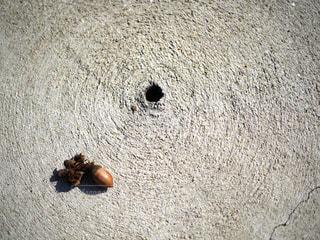ドングリと穴の写真・画像素材[1599820]