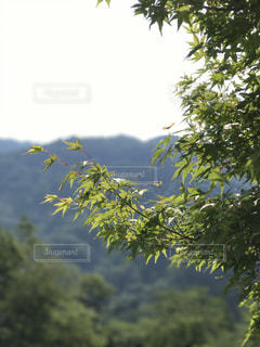 新緑の写真・画像素材[751536]