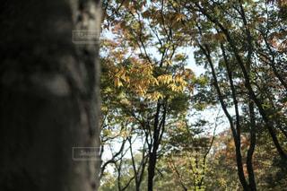 近くの木のアップの写真・画像素材[869238]