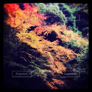 秋の箕面の写真・画像素材[750361]