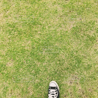 芝生の写真・画像素材[761204]