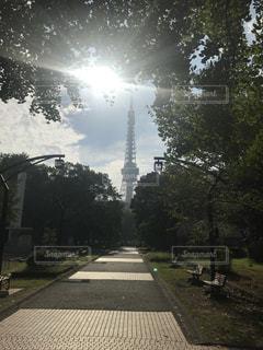 道の真ん中に東京タワーの写真・画像素材[812374]