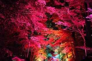 下鴨神社 糺ノ森の写真・画像素材[750706]