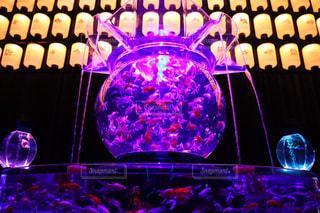 金魚の舞の写真・画像素材[750709]