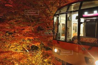 紅葉狩り列車の写真・画像素材[750924]