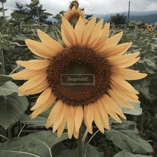 近くの花のアップの写真・画像素材[750758]