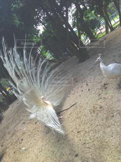 No.208328 鳥