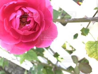 近くの花のアップの写真・画像素材[751108]